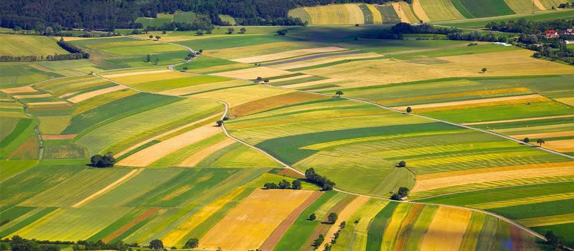 صنایع کشاورزی در هلند